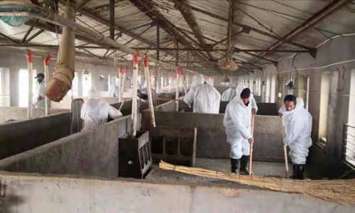 Cán bộ thú y khử trùng chuồng trại của Sun Dawu, sau khi 15.000 con chết vì virus. Ảnh: Sun Dawu.
