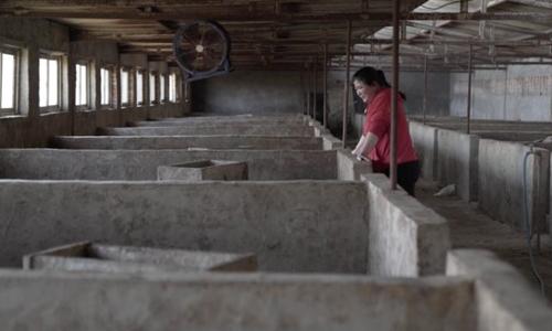 Zhang Haixia khóc khi nhìn vào những ô chuồng trống rỗng sau khi tất cả lợn chết hồi đầu năm 2019. Ảnh: CNN.