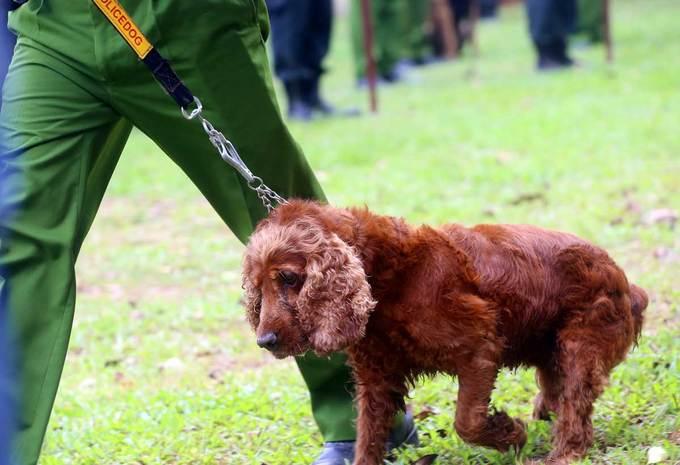 Hơn 280 chó nghiệp vụ của cảnh sát thi tranh tài