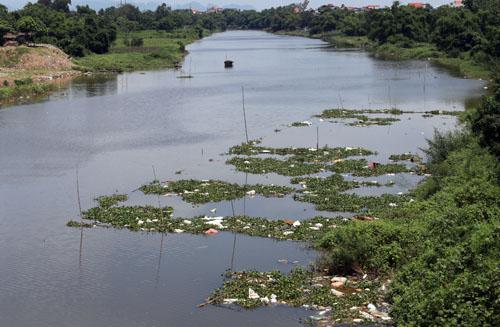 Nhiều xác lợn chết trôi trên sông ở Hà Nội - ảnh 1