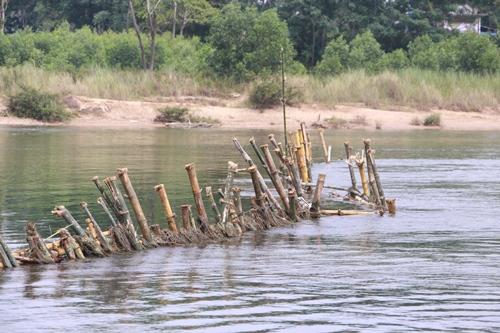 Hàng cọc tre do người dân đóng trên sông Bồ để ngăn tàu thuyền khai thác cát. Ảnh : Võ Thạnh