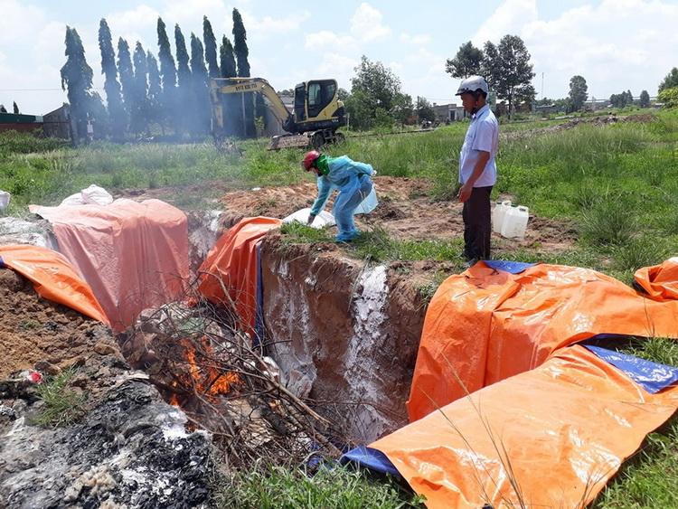 Cơ quan chức năng tiêu hủy 4 tấn thịt nhiễm bệnh tả heo châu Phi. Ảnh: Thái Hà