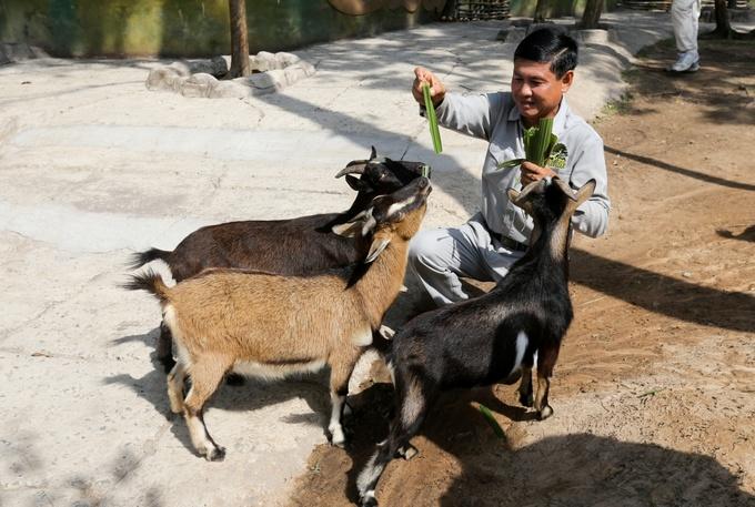 Khẩu phần ăn của động vật bán hoang dã ở Phú Quốc
