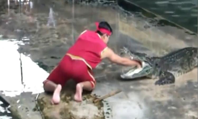 Thanh niên diễn xiếc cùng cá sấu hốt hoảng khi bạn ngã -