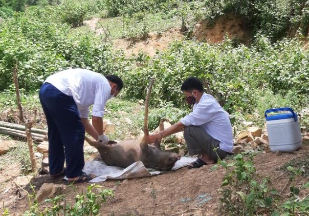 Cơ quan chức năng lấy mẫu lợn bị chết tại huyện Kỳ Sơn để xét nghiệm. Ảnh: CTV.