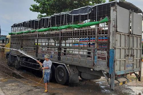Sau gần hai ngày bán lợn, cơ quan chức năng Quảng Nan mới phát hiện lấy mẫu xét nghiệm. Ảnh: Đắc Thành.