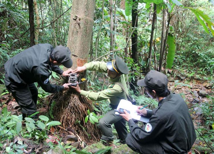 Bảo vệ và kiểm lâm đặtbẫy camera, giám sát đa dạng sinh học ở Khu bảo tồn thiên nhiên Saola. Ảnh: WWF.