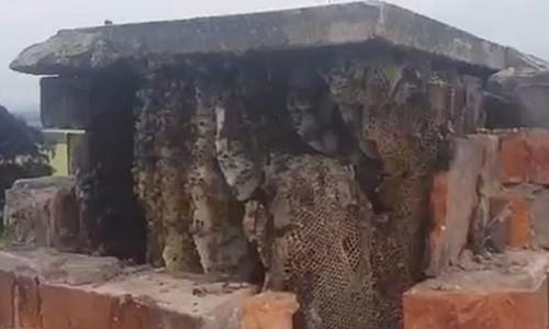 Tổ ong mật khổng lồtrong ống khói tòa nhà ở Anh. Ảnh: Rob Davies.