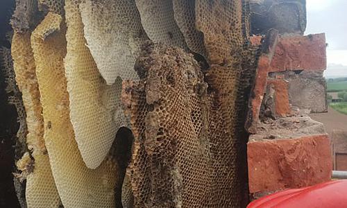Một phần ống khói được dỡ bỏ để di chuyển tổ ong. Ảnh: Rob Davies.