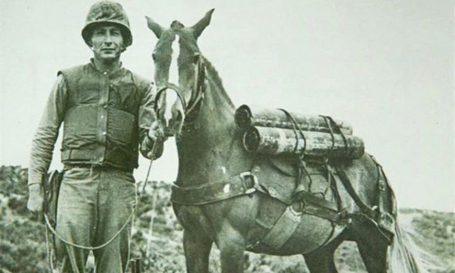 Chiến mã duy nhất được phong hàm thượng sĩ của quân đội Mỹ - ảnh 3