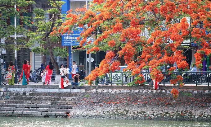 Hải Phòng vào mùa hoa phượng đẹp nhất trong năm