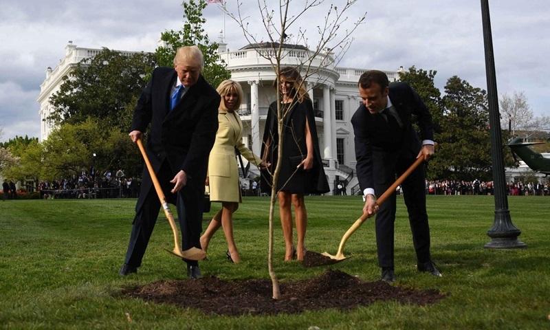 Cây sồi Trump và Macron cùng trồng ở Nhà Trắng đã chết - VnExpress