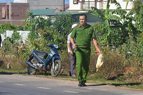 Cảnh sát giúp gom số vịt chạy ra đường cho tài xế bị nạn. Ảnh: Quang Hà