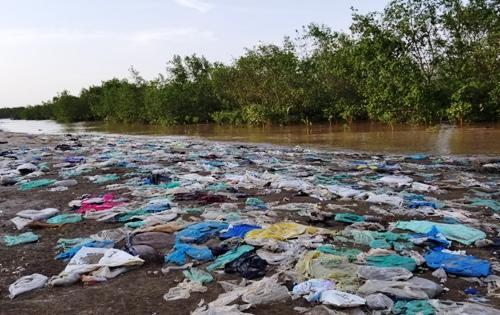 Không chỉ tấn công các cánh rừng lâu năm, tại cánh rừng mới trồng bảo vệ đê biển quốc gia tại quận Đồ Sơn, rác tràn ngập bên mép rừng, chân đê. Ảnh: Giang Chinh