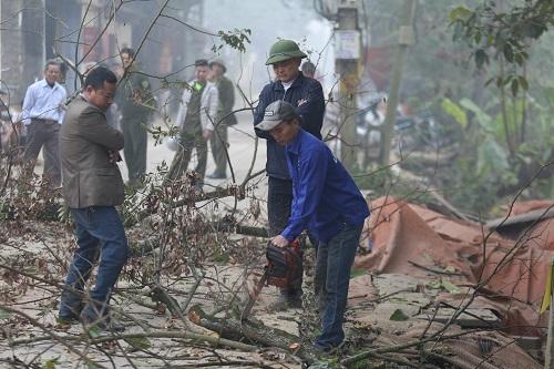 Cộng đồng dân cư thôn Phụ Chính chặt hạ hai cây sưa hồi tháng 1/2019. Ảnh: Gia Chính