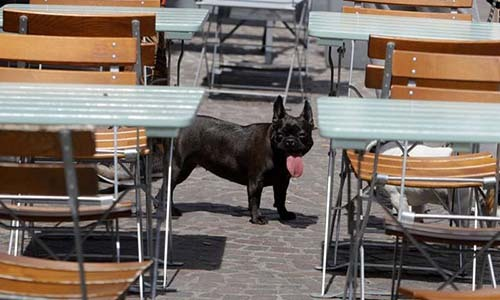 Một chú chó trong nắng nóng ở Lille, miền bắc nước Pháp ngày 24/6. Ảnh: AP.