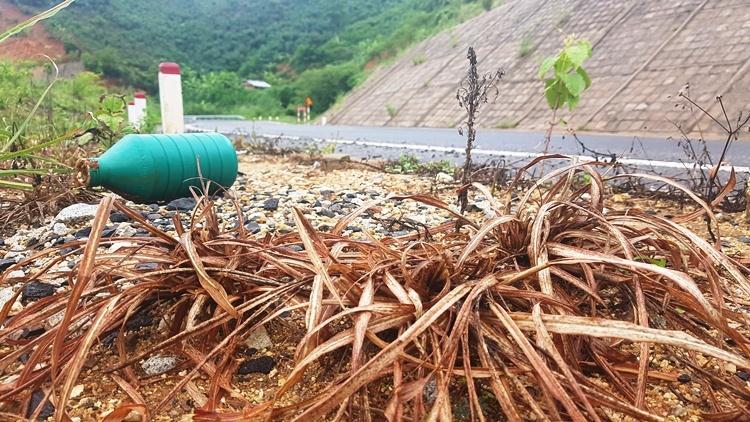 Cỏ cháy bên cạnh chai thuốc diệt cỏ ven quốc lộ 24 ở Kon Tum. Ảnh: Trần Hóa.