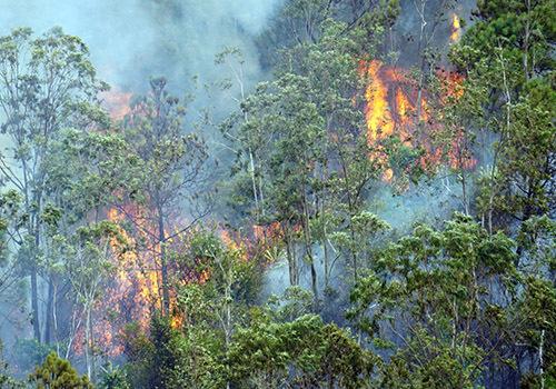 Ngọn lửa bùng phát ở vị trí đồi cao, gây khó khăn cho lực lượng cứu rừng. Ảnh: Đ.G.