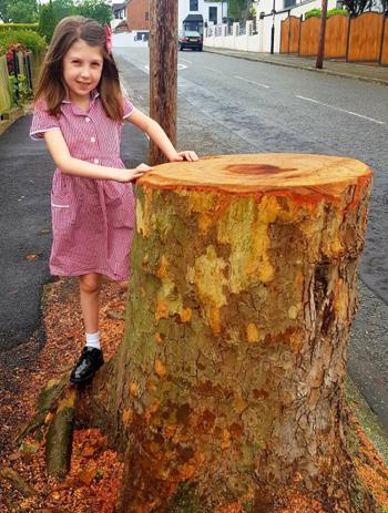 Bé gái Anh viết thư gửi chính quyền sau khi cây xanh bị chặt - ảnh 1