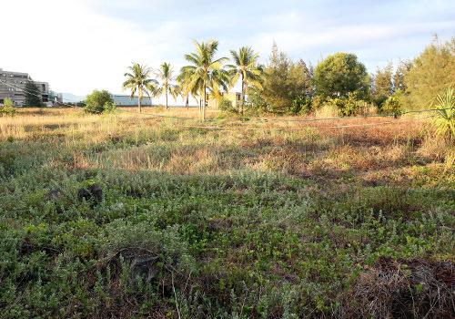 Khu đất 8,5ha củadự án Hòn Ngọc Á Châu ven biển chậm triển khai sau hơn 10 năm, đang được Đà Nẵng thu hồi làm công viên công cộng. Ảnh: Nguyễn Đông.