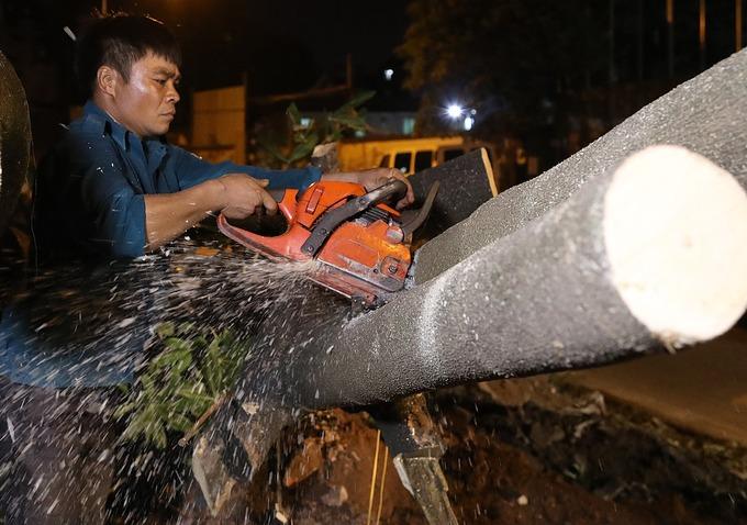 Công nhân xuyên đêm đánh chuyển cây hoa sữa ở Hà Nội