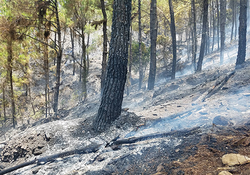 Hàng trăm cảnh sát, bộ đội chữa cháy rừng thông ở Huế - ảnh 2