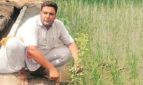Một người dân bang Punjab trồng cây xanh và chụp ảnh để xin giấy phép sử dụng vũ khí. Ảnh: India Express.