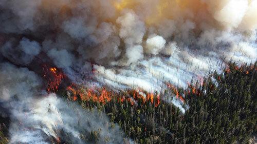 Đám cháy thiêu rụi nhiều cánh rừng ở Siberia trong tuần qua. Ảnh: Reuters.