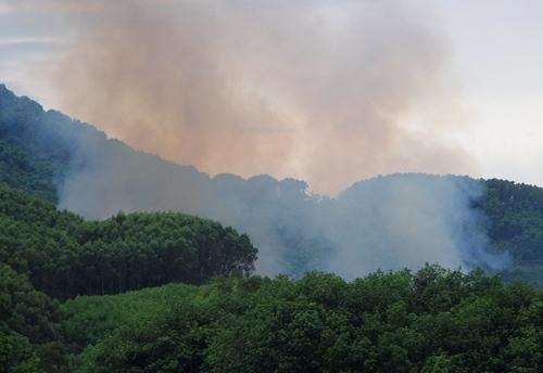 Đám cháy rừng keo tràm nhìn từ xa.Ảnh: Võ Thạnh