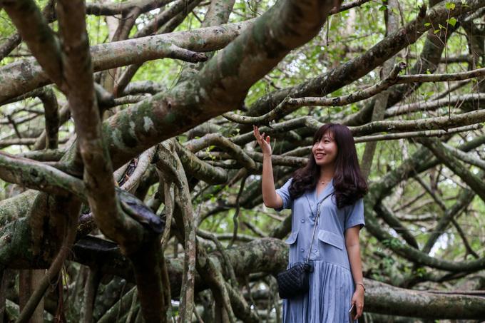Cây gừa hơn trăm tuổi tỏa tán rộng gần 3.000 m2 ở Cần Thơ