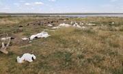 11.000 con vịt chết do trúng mưa đá to bằng quả bóng chày