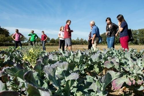 Người dân ngắm nhìn rau củ mọc trong nông trại Herenboerderij ở Boxtel. Ảnh: AFP.