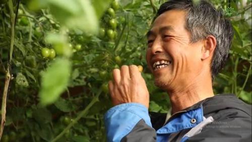 Ông Nguyễn Vũ Sĩ Hoàng bên vườn cà chua sai trĩu quả của gia đình.