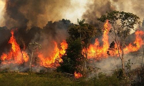 Cháy rừng ở Amazon đạt mức kỷ lục trong năm nay - VnExpress