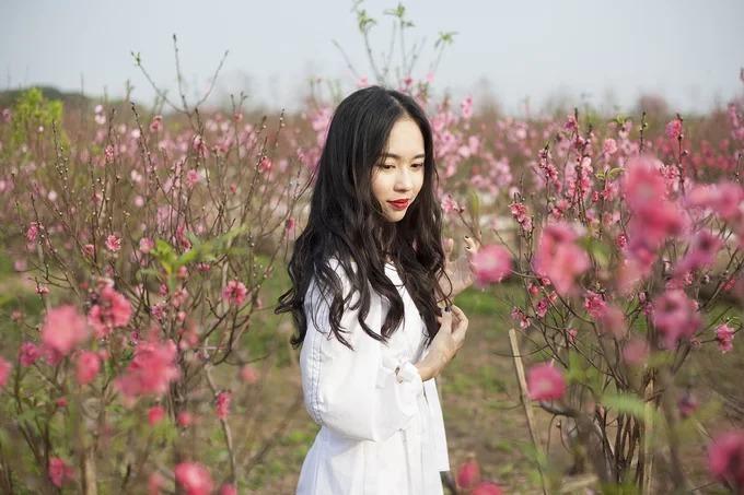 Cô gái Hà Nội chụp hình ở vườn đào Nhật Tân dịp Tết 2019. Ảnh: Tài Hoàng