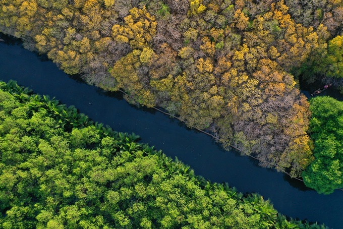 Rừng ngập mặn Rú Chá lúc trổ bông