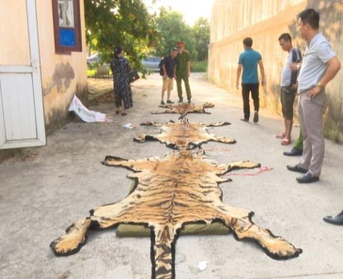 Cảnh sát giải cứu con hổ 240 kg suýt bị nấu cao - ảnh 2