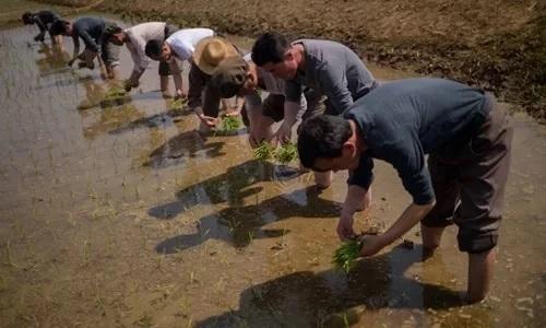 Nông dân Triều Tiên cấy lúa ở Nampho ngày 12/5. Ảnh: AFP.