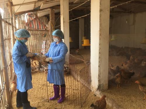 Chủ động phòng ngừa là giải pháp tốt nhất để đảm bảo an toàn cho các hộ chăn nuôi.