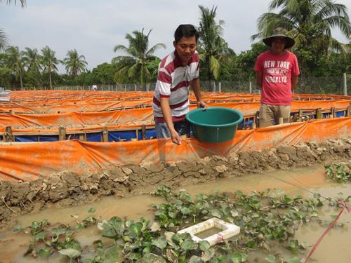 Thả bèo để làm mát cho lươn. Ảnh: Sở Nông nghiệp và Phát triển Nông thôn tỉnh Bình Phước.