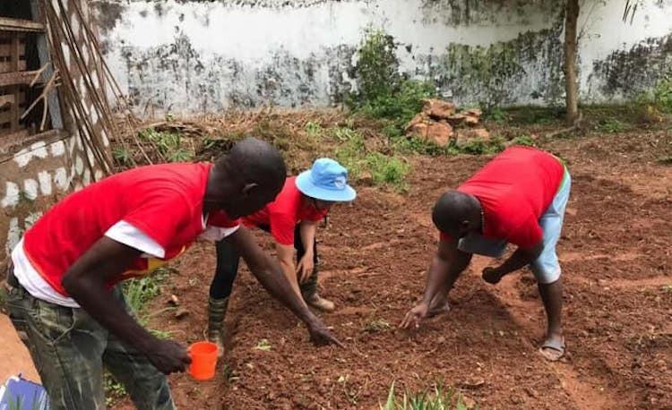 Nữ sĩ quan mũ nồi xanh giúp dân Trung Phi trồng trọt - page 3 - 2