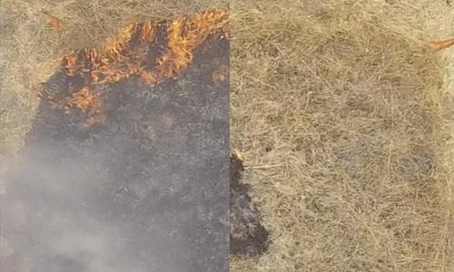 Thảm cỏ phủ chất làm chậm cháy mới (phải) không bị phá hủy. Ảnh: UPI.
