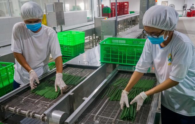 Sản xuất ống hút bột gạo ở miền Tây