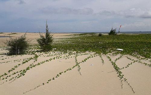 Cây cối sinh trưởng trên cồn cát. Ảnh: Tổng cục Phòng chống thiên tai.