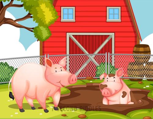 Năm câu đố thử thách hiểu biết về động vật - ảnh 2