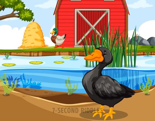 Năm câu đố thử thách hiểu biết về động vật - ảnh 3