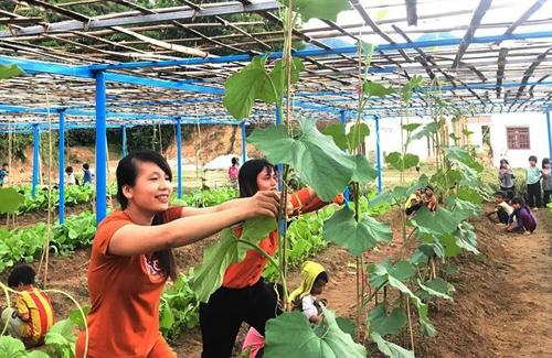 Giáo viên trồng rau bổ sung cho bữa ăn bán trú - ảnh 1