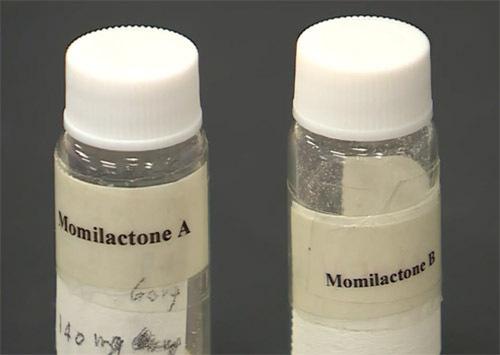 Hợp chất MA và MB tách chiết từ gạo.