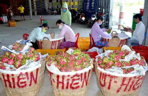 Xuất khẩu nông sản vào thị trường Trung Quốc còn gặp nhiều khó khăn.