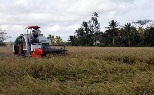 Nông dân miền Tây thu hoạch lúa. Ảnh: Cửu Long